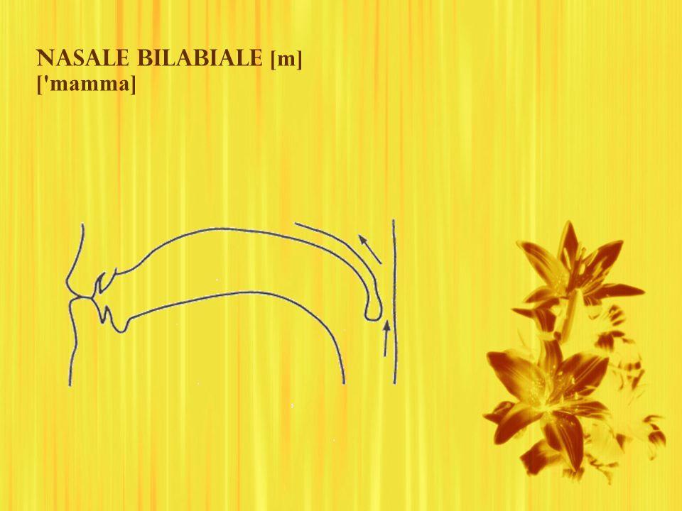 Nasale bilabiale [m] [ mamma]